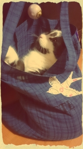 Merlin in a bag